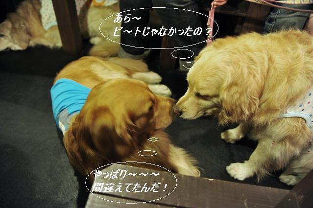 100508 156  モコ&ケニー