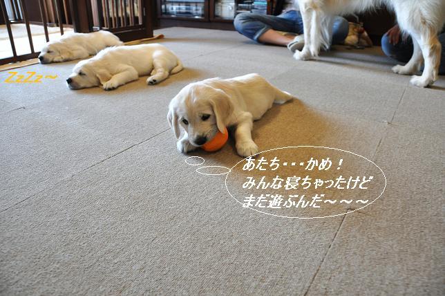 100510 142 かめちゃん