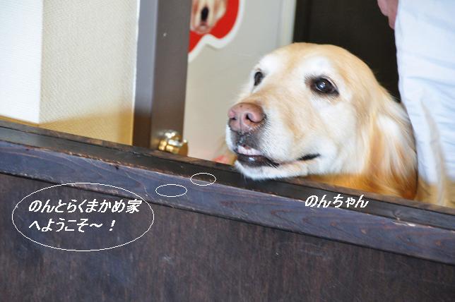 100510 036  のんちゃん