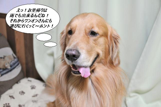 101008 011  ケニー
