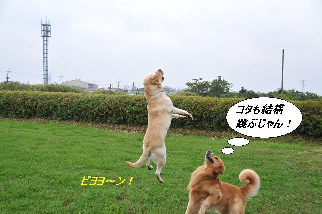 101015 306  虎太郎&ケニー
