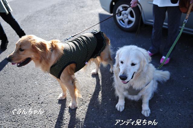101024 931  ぐるんちゃん&アンディ