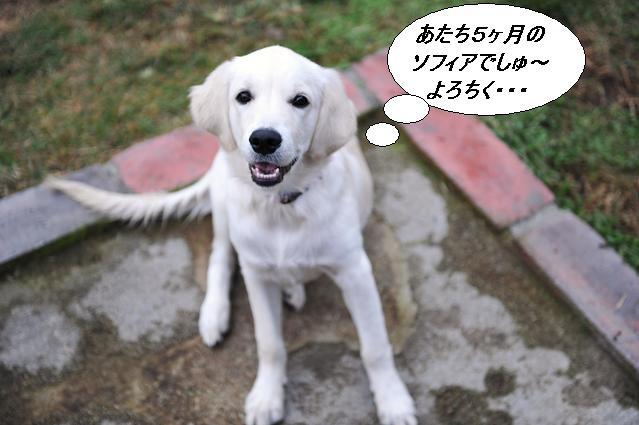 101024 955   ソフィアちゃん