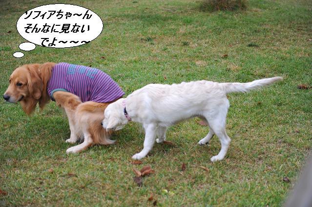 101024 975  ケニー&ソフィアちゃん