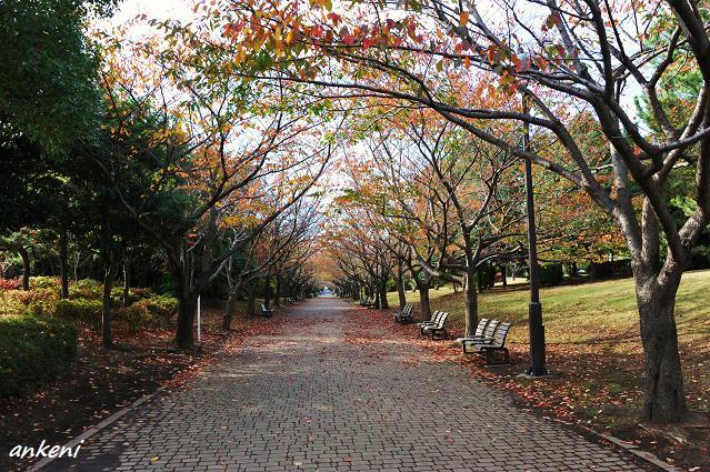 101116 390  葛西臨海公園