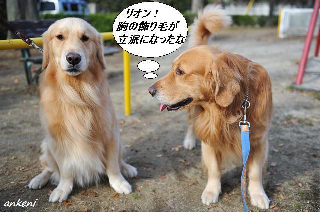 101130 029  リオン&ケニー