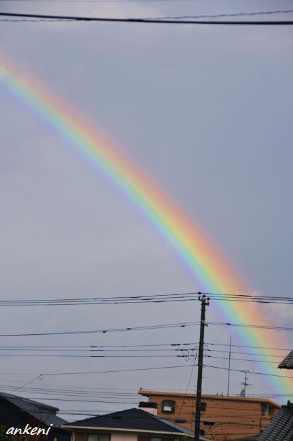 101203 069  虹