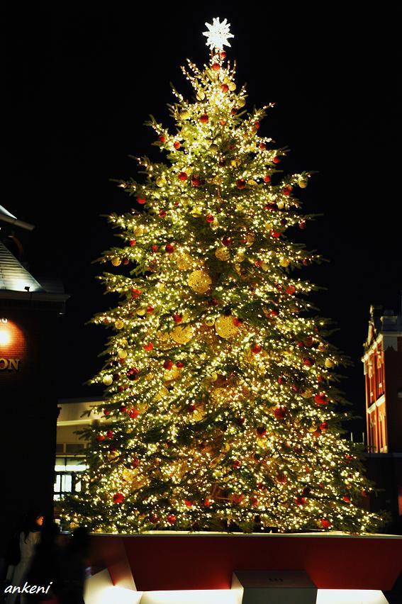 101218 089  クリスマスツリー