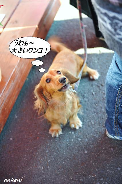 041  看板犬