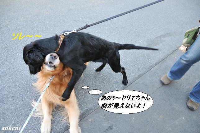 ケニー&セリエ110118 090