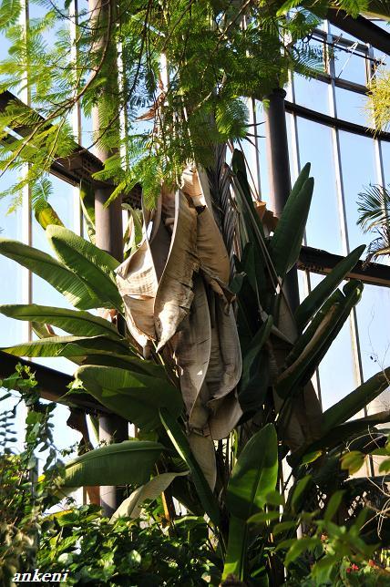 110123 432  熱帯植物園