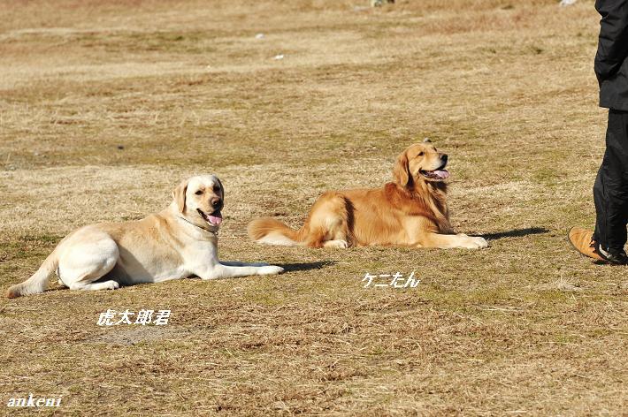 110127 099  コタ&ケニー