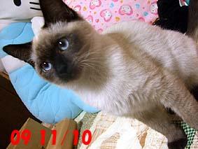 2009-11-10---3.jpg
