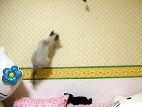 2009-11-11---5.jpg