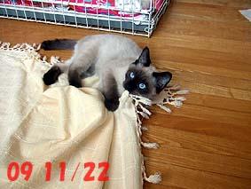 2009-11-22---1.jpg