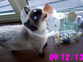 2009-12-13---1.jpg