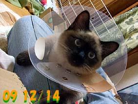 2009-12-14---3.jpg