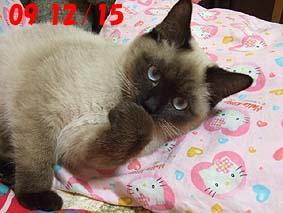 2009-12-15---1.jpg