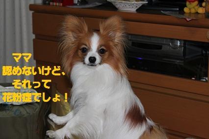 2011_0214_174232-IMG_1108.jpg