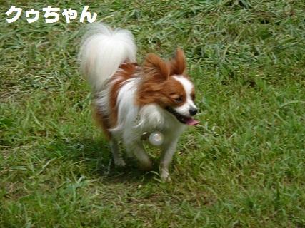 b20100813-8.jpg