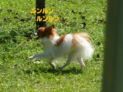 b201009263.jpg