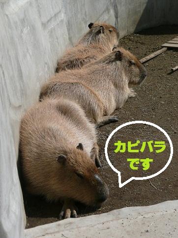 b201010165.jpg