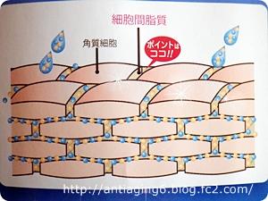 細胞間脂質とは