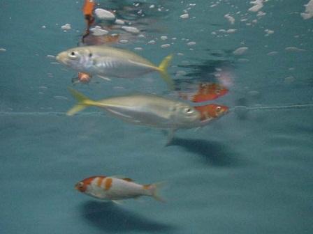 fish[1]