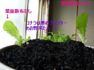螳カ蠎ュ闖懷恍+705_convert_20120208092209