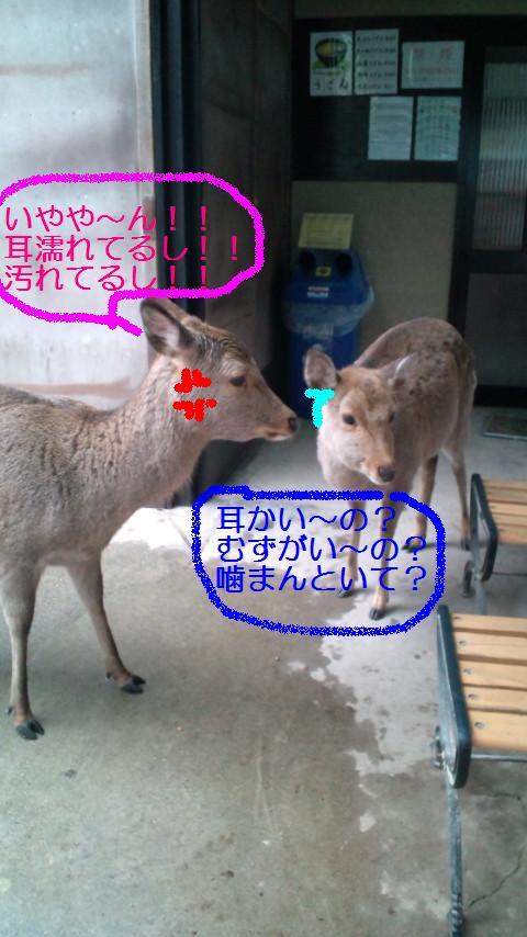 奈良 003