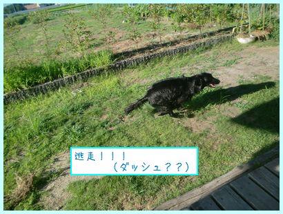 CIMG8868.jpg