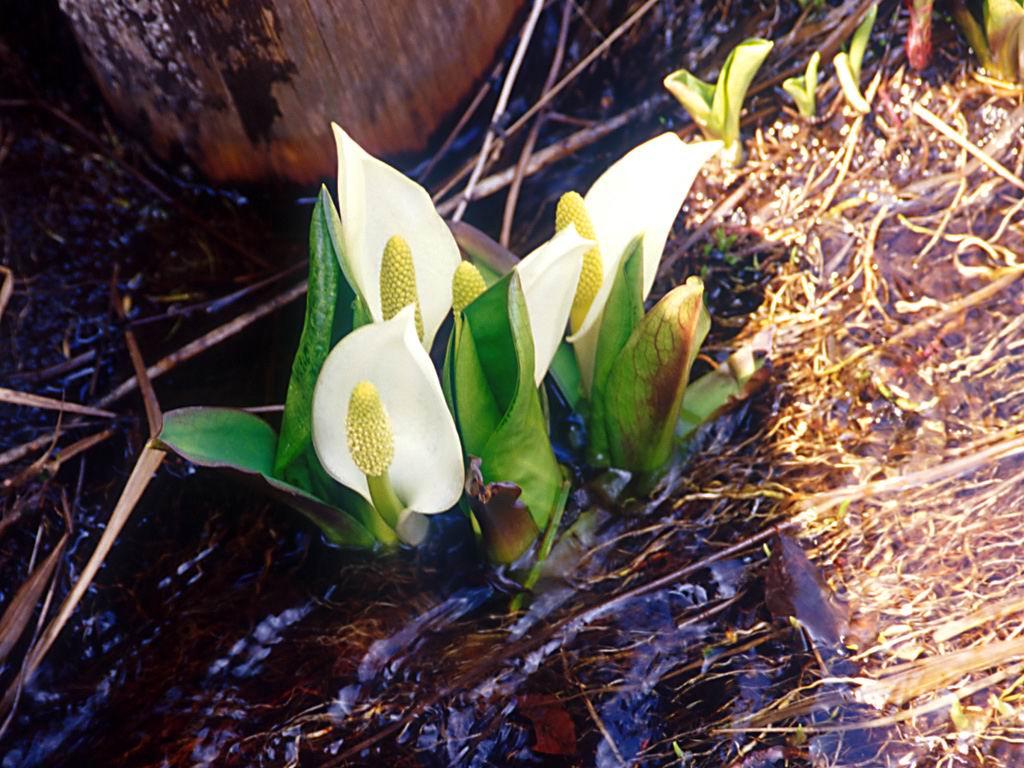 Flower1-002.jpg