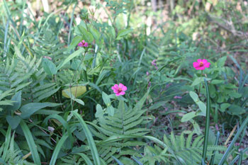 竹やぶの花
