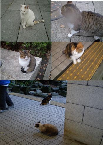 江の島神社の猫たち