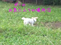 fc2blog_20121005195626db9.jpg