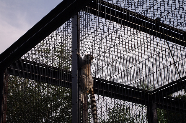 到津の森公園 猿