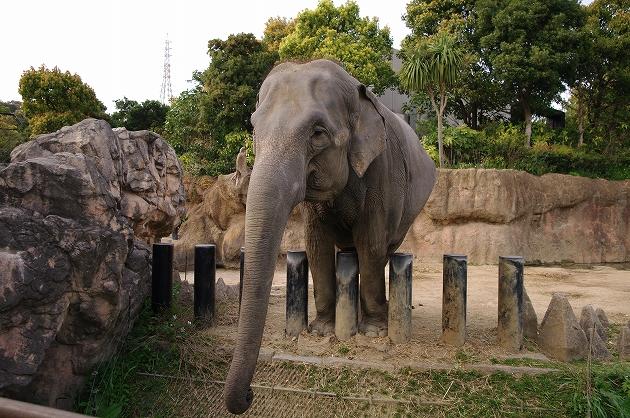 到津の森公園 象