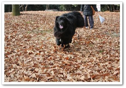 2011_0104kouen0124.jpg