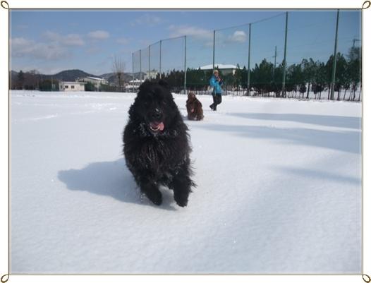 2011_0118yukiasobi0163.jpg