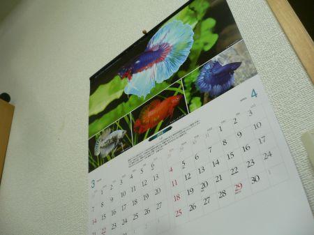 P1120285_450.jpg