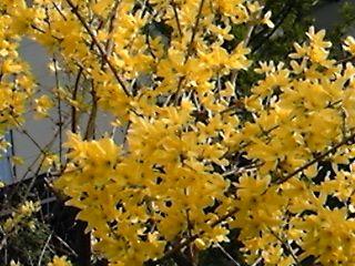 DVC00733  黄色い花