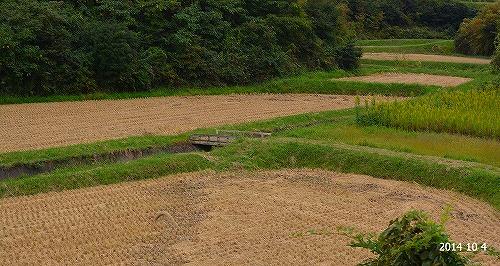 s-刈取り後の稲田20141004 (1)