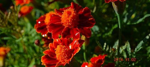 s-赤い花2141102
