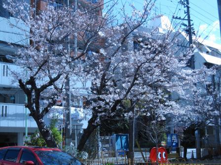 桜3月29日