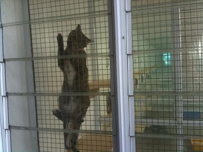 SPCA1.jpg