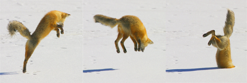 fox-fail-to-landing.jpg