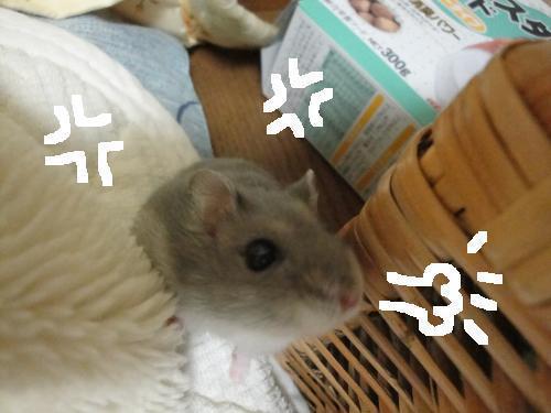 _20100326075635.jpg