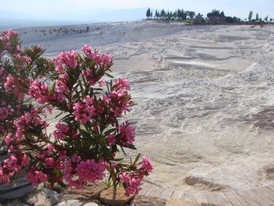 トルコのお花と石灰棚