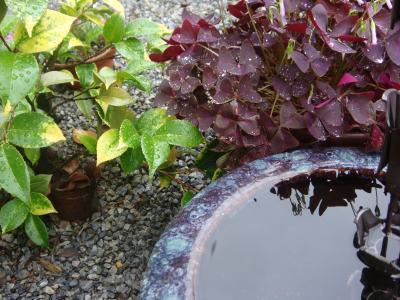 雨上がりのお庭
