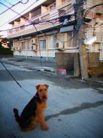 20110323 震災10